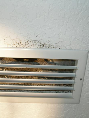Mold In Ac Vents >> Sarasota Ac Mold Removal Sarasota Air And Heat